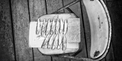 32 - Fische I
